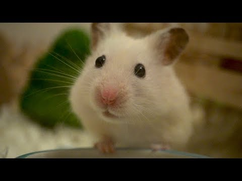 Hamster life in slow motion
