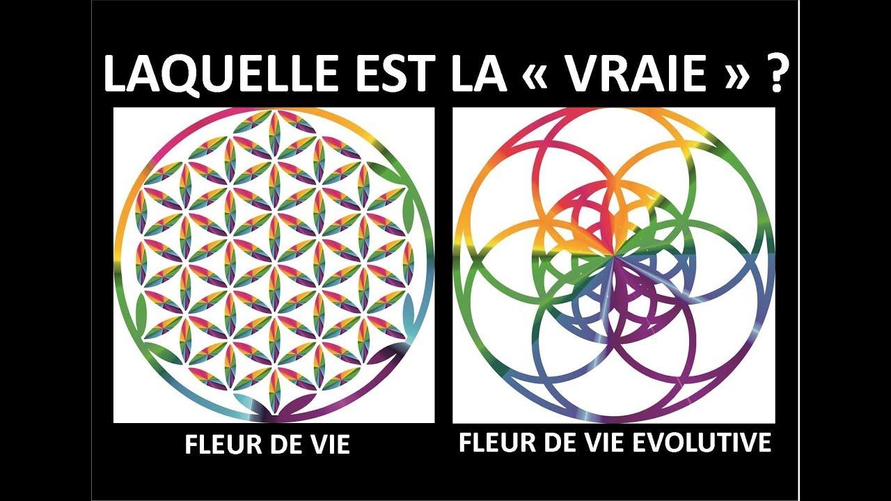 Que Penser De La Fleur De Vie Evolutive Gaiamamart