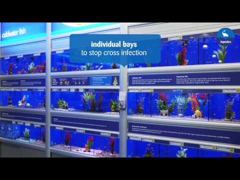 Making Our Pets At Home -- Aquatics
