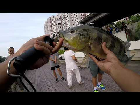 Singapore Fishing | Pang Sua Canal Legal Ground And Huerco Jp Rod Series FF-500
