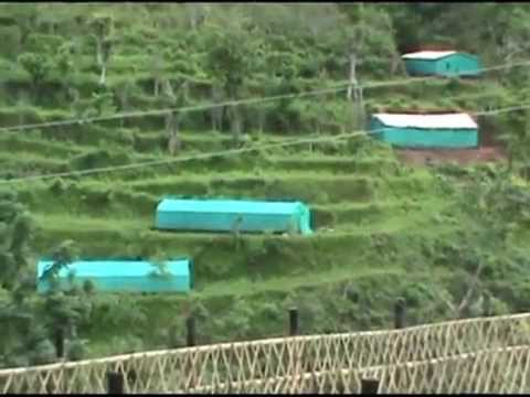 Farmers attracted to organic coffee farming - Gorkha