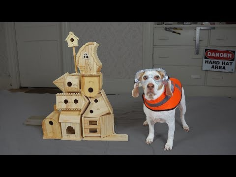 Dog Makes DIY Bird House: Funny Dog Maymo Crafts