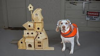 Dog Makes DIY Bird House: Funny Dog Maymo Crafts