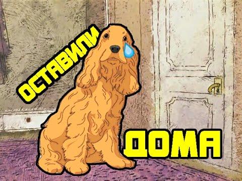 Когда хозяин уходит а собака хочет с ним  . Собака просит взять её с собой . Кокер спаниель Сёма.