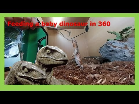 Feeding a baby dinosaur in 360