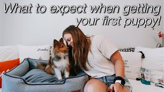 what to expect when getting your first PUPPY   my experience with my sheltie puppy