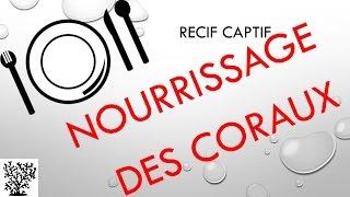 Le nourrissage des coraux - Mr Recif Captif #29