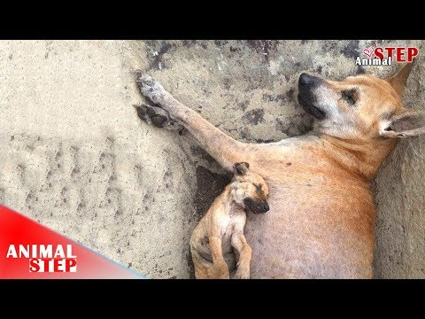 Sad Life! Poor Dogs Left the World Even Though Received Two Months Of Treatment