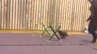 Khaos Bug Buzz