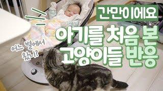 아기를 처음 본 고양이들 반응 | Cats responding to the baby for the first time
