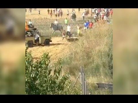 Atropellan y matan a un toro durante un encierro en Centenera (Guadalajara)
