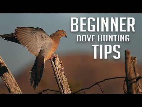 Beginner Dove Hunting Tips!