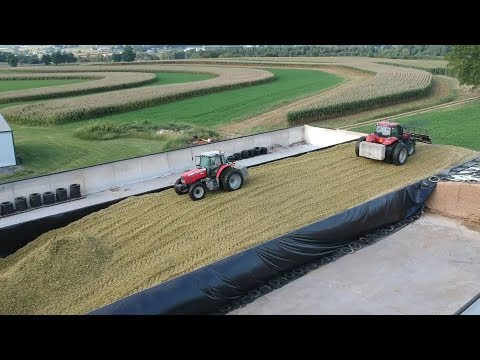 Corn Silage Harvest Begins | Filling …