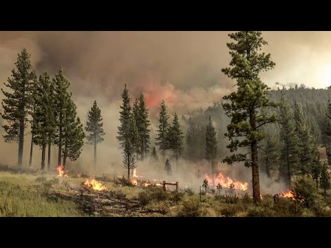 Rapidly growing Tamarack Fire in California prompts evacuations ...