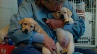A Look into Puppy Raising