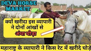 Deva Horse 2019-देखिए महाराष्ट्र के व्यापारी ने देवा शरीफ से किस रेट में खरीदे घोड़े (9422482008)