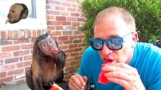 Monkey Watermelon Party!