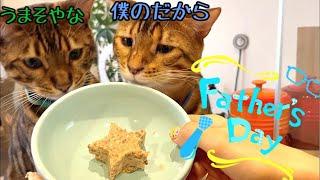 【生配信6/20】父の日なのでパパ猫テトにマグロとフォアグラのスターケーキをあげる生配信