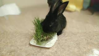 Клип 🐰 зайца