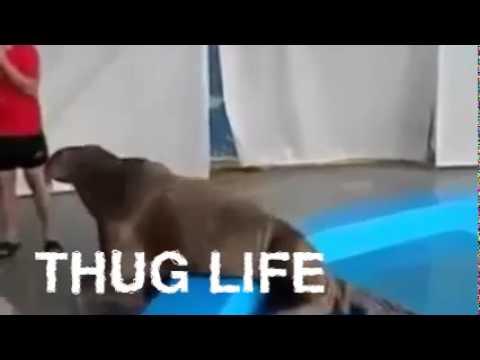 Thug Life Seal