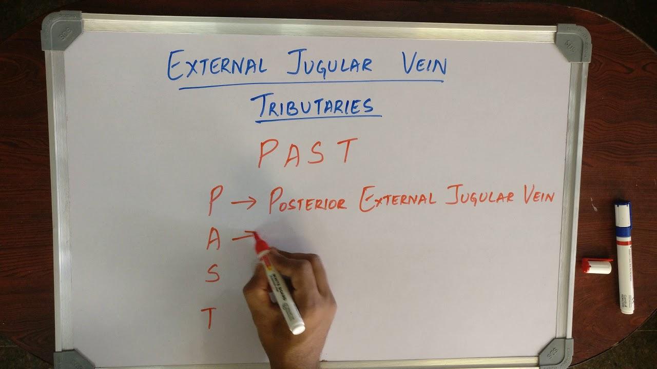 Medical Mnemonic Pocket External Jugular Vein Tributaries Youtube
