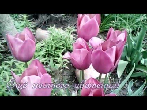 Удобрение для тюльпанов весной Цветы в саду