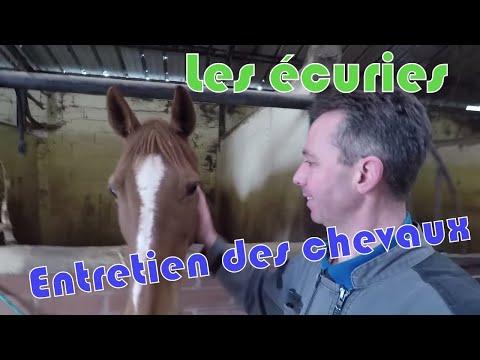 Entretien des chevaux de mon écuries