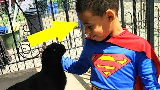 Boy Saves Homeless Cats While Dressed As A Super Hero