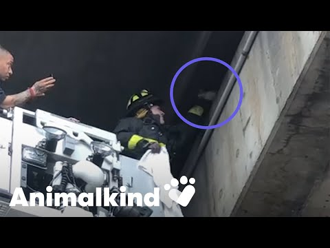 Kitten rescued by firefighters from busy overpass | Animalkind