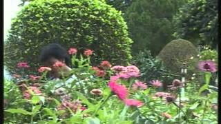 ANI GO SUNI GO DO - Bodo Hit Song - Video Jukebox