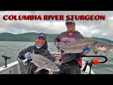 Columbia River Sturgeon Fishing