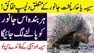 Hidden Facts About Porcupine & Hedgehog (Rats) Animals in Hindi/Urdu || Dilchasp Maloamat