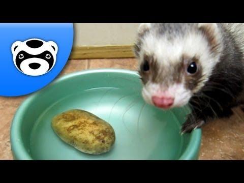 Funny Ferret Steals a Potato
