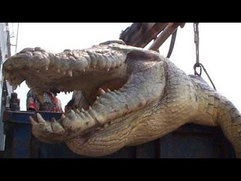 5 of the WORLD'S BIGGEST CROCODILES ever caught on film! ULTIMATE CROC compilation!