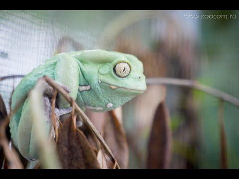 Вопрос: Может ли кошка отравиться жабой?