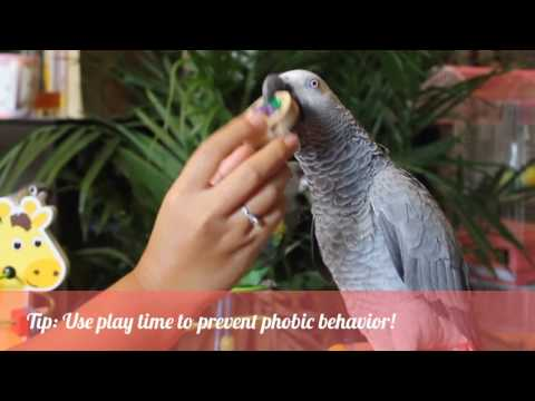 PARROT CARE DAILY ROUTINE AND TIPS - A day in the life of 3 parrots