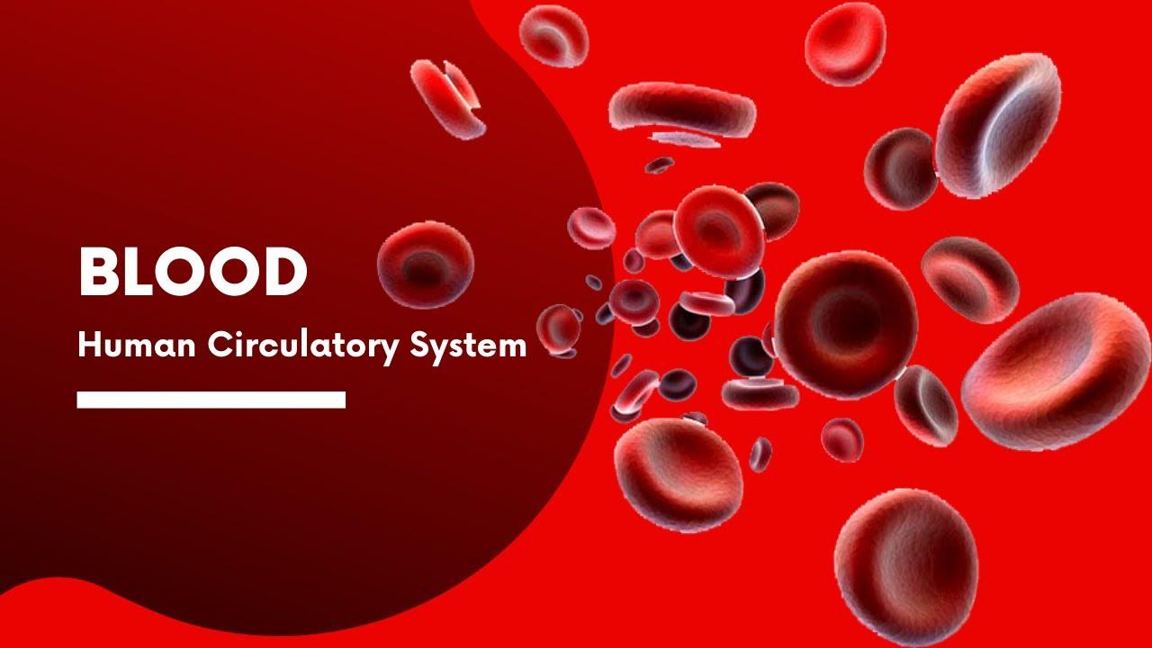 Blood | Human Circulatory System | Life Processes ...