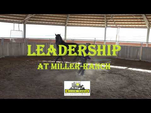 Sultan PER Stallion - Learning Follow The Leader