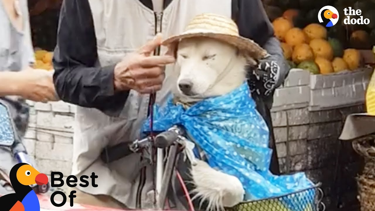 Man Protects Dog From Rain + Funniest & Cutest Animal Videos March 2018 | The Dodo Best Of