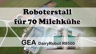 Milchviehstall für 70 Kühe mit einem DairyRobot von GEA
