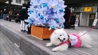 KOBEハーバーランドumieモザイクお散歩したョ(*^^)vクリスマスの雰囲気...