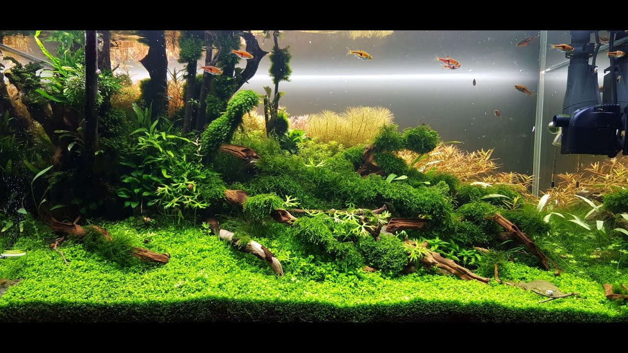 "ADA 90p Aquascape ""Running Up That Hill"" Maintenance Day ..."