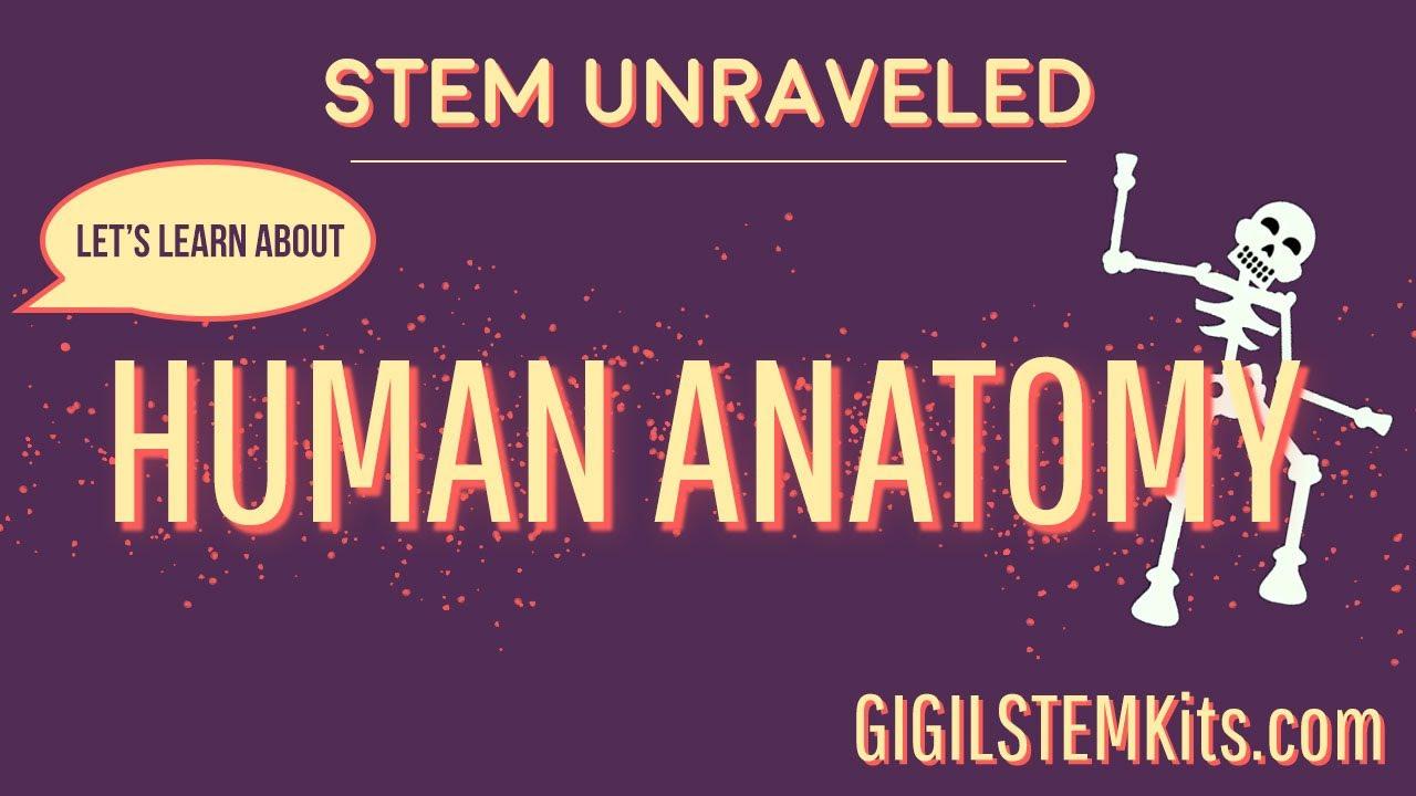 STEM Unraveled - Human Anatomy