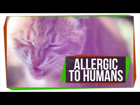 Can Pets Be Allergic to People?