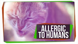 Video Can Pets Be Allergic to People? download MP3, 3GP, MP4, WEBM, AVI, FLV September 2017