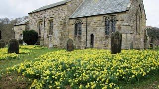 North York Moors Country Walk - Farndale Daffodils Walk round
