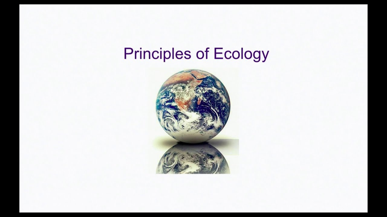 25 Principles of Ecology Part 2 Sr. Secondary 314 - YouTube