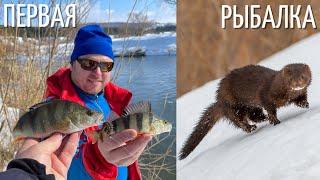Первая рыбалка на спиннинг 2021 Встреча с норкой Окушки щучки Настроение весна