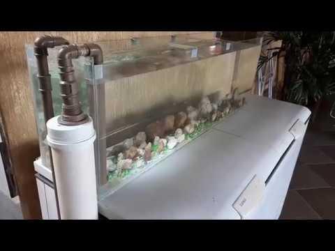 Filtro de pvc para aqu rio como criar tilapias parte3 for Como criar tilapias