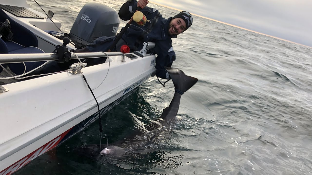 Håkjerringfiske i Skagerrak - Fishing Greenland shark in Skagerrak